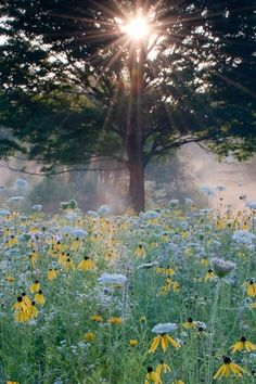 meadow morn
