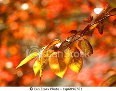 Fall Cherry Blossom - I like the colors.