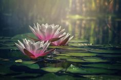 Gilding The Lily by Carol Japp