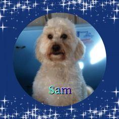 Sam. dog boarding ringwood