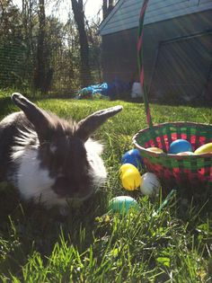 Bunny is the winner of the Easter egg hunt - March 31, 2013