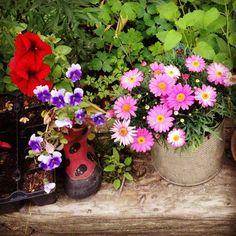 Copenhagen: i fiori sbocciano in luoghi negli stivali di gomma non più utilizzati dai bambini. #100in1MI #100in1day #Whatif #copenhagen #inspiration #enjoyMI #città #rigenerazioneurbana #garden #ortiurbani