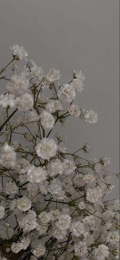 Rose Wallpaper, Locked Wallpaper, Galaxy Wallpaper, Iphone Wallpaper, Lock Screen Backgrounds, Cute Backgrounds, Wallpaper Backgrounds, Nature Aesthetic, Flower Aesthetic