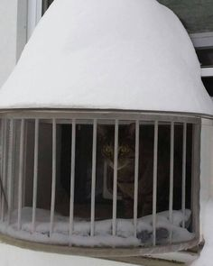 The Cat Solarium has been called the Must-Have cat product by some of the Top Cat Bloggers around the world. Cats love basking in the sun and feeling a cool breeze in their fur. We have created the perfect solaution for cats living in large cities that do not offer access to a yard or