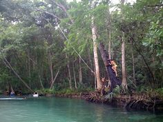 Swinging from a tree at Weeki Wachee River