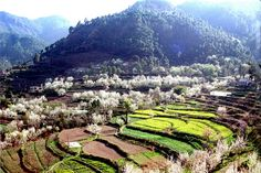 """Barog"" on way to Shimla, India"
