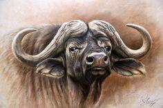 Steve Morvell Australian Wildlife Artist African Cape buffalo bull Charcoal engraving - painting on board. Buffalo Bulls, Buffalo Art, Bull Painting, Africa Painting, Wildlife Paintings, Wildlife Art, Leon Logo, Buffalo Painting, African Buffalo