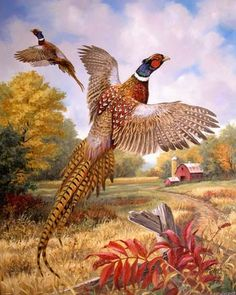 Linda Picken Art Studio / Pheasant.jpg