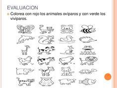 Worksheet. Animales Domestico Y Salvaje Para Colorear Dibujos Expoimagescom