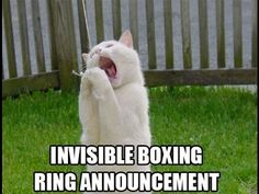 Cute kittens playing boxing with his mother | Funny Cats Compilation | CUTE FUNNY ANIMALS -  #animals #animal #pet #cat #cats #cute #pets #animales #tagsforlikes #catlover #funnycats  Learn how to speak cat! Click HERE for the cat bible! Cute kittens playing boxing with his mother | Funny Cats Compilation | CUTE FUNNY ANIMALS  - #Cats