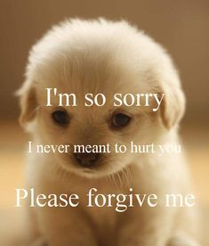 Forgive Me Quotes Please Forgive Me Let Me Set This Straight  I'm Sorry  Pinterest
