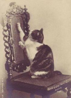 a Bad Victorian who cannot resist the nicely woven cane chair back