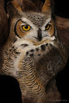 Easy Clay Sculptures : The Wildlife Gallery Wholesale Fur Dressing and Custom Taxidermy Studio - Dear Art Art Sculpture En Bois, Sculpture Clay, Owl Art, Bird Art, Easy Clay Sculptures, Wood Owls, Owl Pictures, Owl Pics, Wood Carving Art