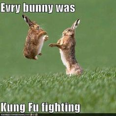 You know the song everybody was kung fu fighting? Well know every BUNNY was kung fu fighting! Humor Animal, Funny Animal Memes, Cute Funny Animals, Funny Animal Pictures, Funny Memes, Funny Easter Memes, Animal Puns, Happy Easter Meme, Cute Animal Quotes
