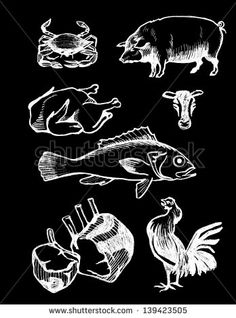 set of chalk board hand drawn food illustrations, meat and seafood