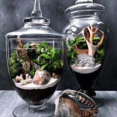 Custom built terrariums displaying seashells found by a customer on Okracoke Island, NC.