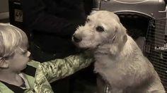 Arthur,el perro aventurero,una historia entrañable(HD)