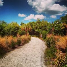 Featuring upland and coastal Marsh, Native American Burial Mounds and an observation tower overlooking the surrounding Neal Preserve, Anna Maria Sound, and distant Tampa Bay. Neal Preserve has an assortment of Birds to view including Black-necked Stilts, Tricolored Heron, Roseate Spoonbill, Blue Jays, and seasonally visiting species. #Bradenton #AnnaMariaIsland #Travel #Birdwatching