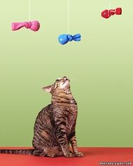 Make your own catnip fish toy (easy enough for kids, too!)