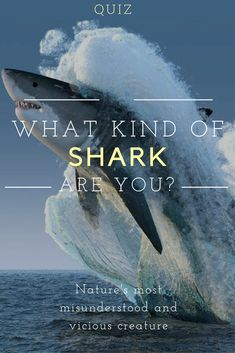 Sharks are feared predators, but they are vital to our ecosystem. If you were one of nature's most vicious and misunderstood beasts, which shark would you be? Let's find out! Animals And Pets, Funny Animals, Cute Animals, Most Famous Memes, Barbados Travel, Barbados Beaches, Shark Party, Great White Shark, Shark Week