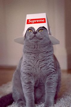Kitty Supreme.