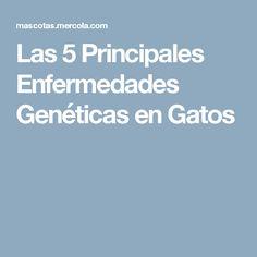 Las 5 Principales Enfermedades Genéticas en Gatos