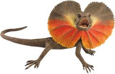 Funny Animals: Frill Necked Lizard New Photos 2012 Colorful Lizards, Large Lizards, Cute Reptiles, Reptiles And Amphibians, Funny Animal Photos, Funny Animals, Animals Photos, Lizard Squad, Lizard Dragon