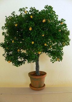 Miniature trees for doll houses made by Earthscapes by Heath 4 inches and up.