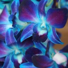 blue orchids - very different choice for flowers, colorful... kinda tropical