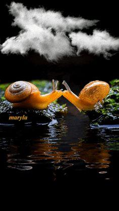 gifs maryla - Αναζήτηση Google