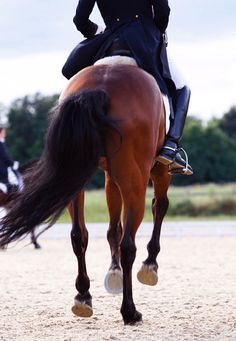 the curious bumblebee || equestrian equine cheval pferde caballo | bay dressage feet cantering