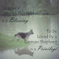 Wicked Training Your German Shepherd Dog Ideas. Mind Blowing Training Your German Shepherd Dog Ideas. German Shepherd Tattoo, German Shepherd Puppies, German Shepherds, German Shepard Quotes, German Shepherd Pictures, Schaefer, Dog Quotes, Friend Quotes, Working Dogs
