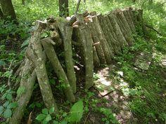 Shiitake Mushroom Logs - an exciting prospect!
