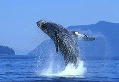Santuario de Ballenas El Vizcaíno, Baja California Sur, México