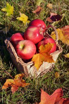 Apple Fruit, Red Apple, Apple Baskets, Apple Harvest, Autumn Photography, Small Farm, Autumn Leaves, Seasons, Fall