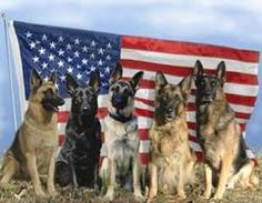 Urge that all military dogs retire on U.S. soil | A recent movement, in attempts to ensure that all military dogs set for retirement will reside on U.S. soil and be put in the care of former handlers, has been proposed to the United States Department of Defense. If this movement were to pass, military dogs set for retirement will be safely transported out of their war zones and back into the US. Click for details and please SIGN and share petition. Thanks.