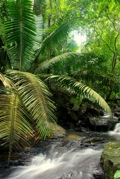 Amazon forest one of the most amazing places to travel