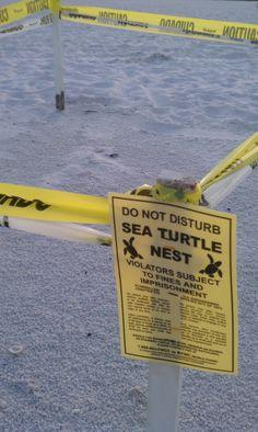 Sea Turtle nesting ground. Marco Island, Florida #Travel #Florida #FlyICT