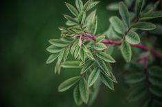 © bysahlia.com Plant Leaves, Garden, Plants, Garten, Lawn And Garden, Gardens, Plant, Gardening, Outdoor