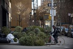 New York Photos of the Week December – January New York Photos, Photos Of The Week, January 6, Pedestrian, Christmas Trees, Street View, Fire, Xmas Trees, Christmas Tree