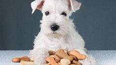 Treat your furry friend to these homemade healthy dog biscuits - WYZA. Schnauzers, Schnauzer Dogs, Best Dog Food, Best Dogs, Yorkshire Terrier, Toxic Foods For Dogs, Bichon Havanais, Best Housewarming Gifts, Dog Biscuits