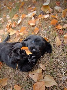 Puppy in the leaves!