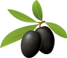 Olives vector art illustration