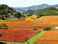 Napa Valley in the fall (link goes to 29 more ideas for visiting Napa Valley) Oh The Places You'll Go, Places To Travel, Places To Visit, Napa Valley Wine, California Travel, Valley California, Northern California, In Vino Veritas, Romantic Travel