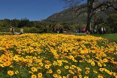 Kirstenbosch | SANBI