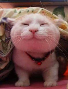 Classic Shironeko ~ Smiling Kitteh