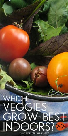 Which veggies grow best indoors? Find out here!Which veggies grow best indoors? Find out about tomatoes, salad greens, peas, Swiss chard, and more that you can grow in an indoor kitchen garden.