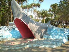 """The only thing on the mind of a shark is to eat."" (Lil Wayne) . . . . . #shark #sharks #sharkquotes #sharkquote #animal #animals #animalkingdom #sharkphoto #sharkphotos #sharkphotography #sharkphotobomb #sharkphotoshoot #greyshark #greysharks #pantai #batu #hiu #batuhiu #pantaibatuhiu #batuhiubeach #batuhiupangandaran #pantaibatuhiupangandaran #pantaibatuhiujawabarat #pangandaran #ciamis #jawabarat #westjava #lil #wayne #lilwayne"