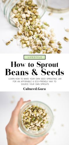 How to Grow Bean Sprouts in a Jar - Cultured Guru Bean Sprouts Growing, Growing Beans, Dried Lentils, Dried Beans, Bean Recipes, Raw Food Recipes, Adzuki Bean Recipe, How To Make Sprouts, Plants
