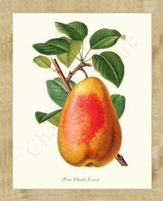 Pear Charles Earnest Fruit Illustration, Giclee art Print, framed $89.95